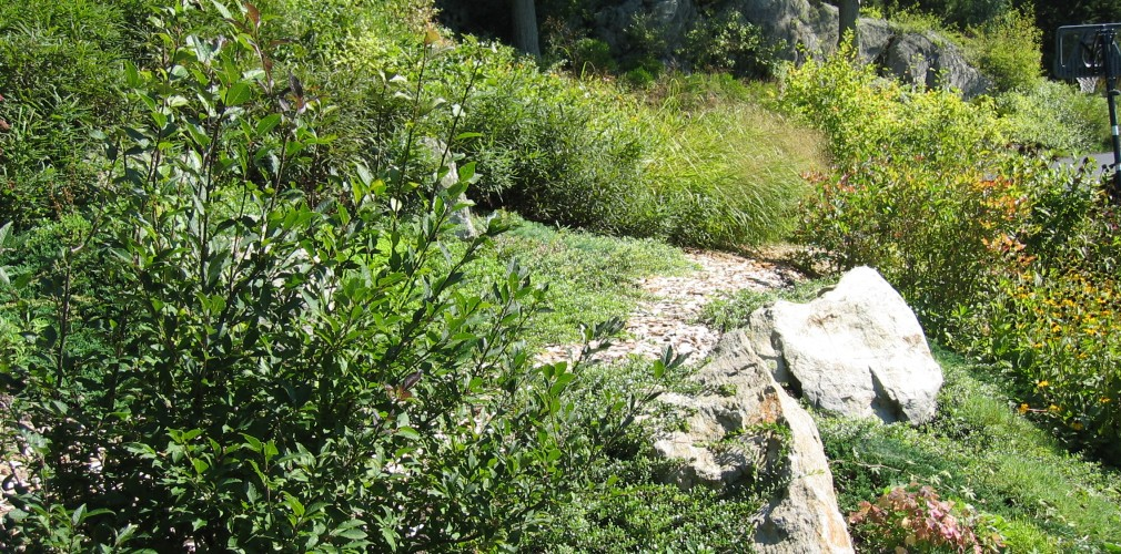 Secret Path On Naturally Restored Slope Above Backyard Lawn.  Placed Boulders Mimic Existing Ledges Beyond.