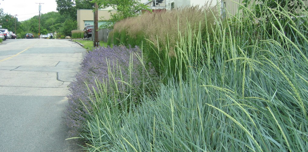 Kent Hospital's Transformation To Sustainable Landscape Approach Features Replacing Lawn Areas With Low Maintenance Native Grasses And Groundcovers.