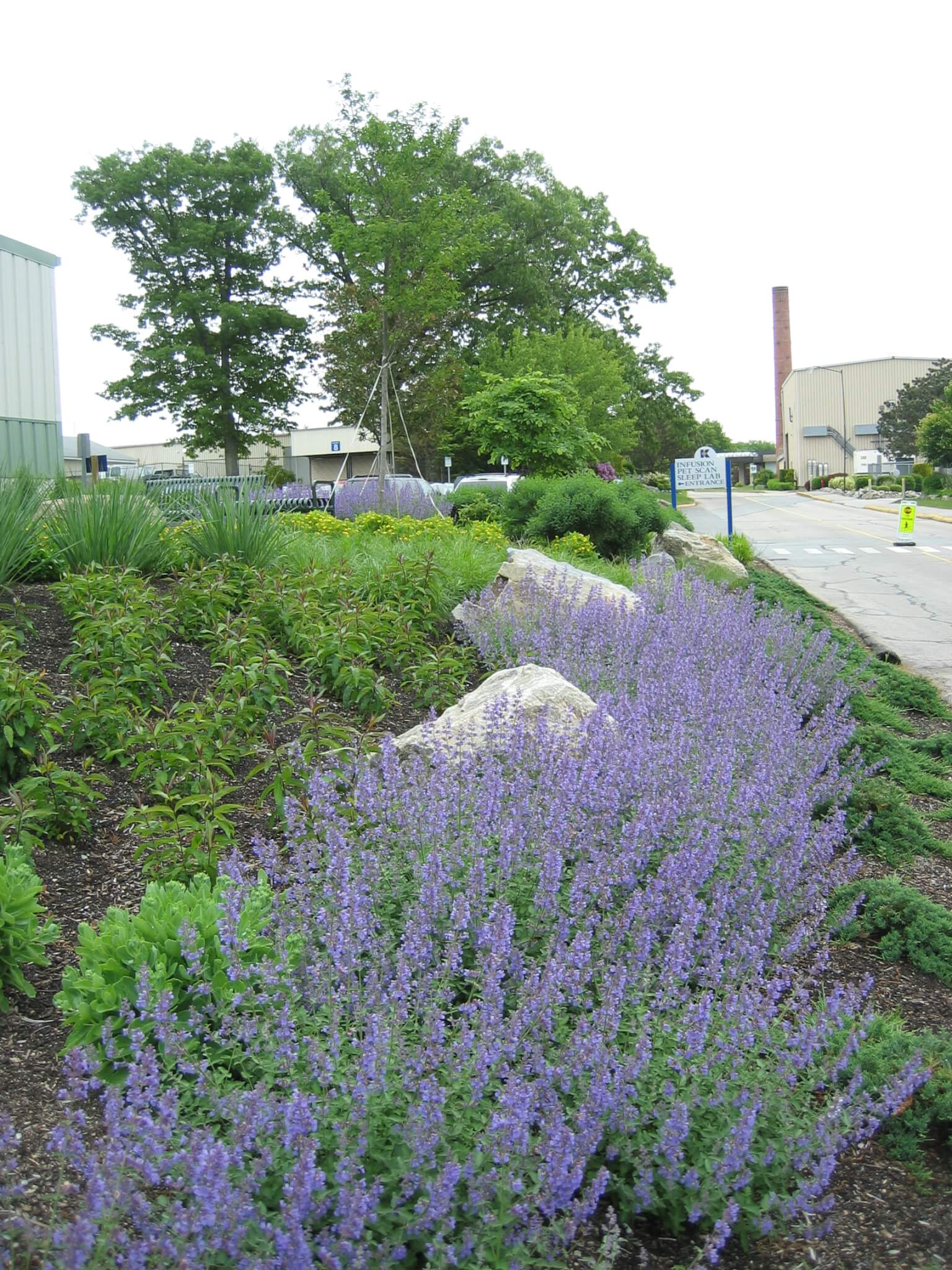 Creeping flowers stabilize and enliven embankment leading up to healing Serenity Garden.