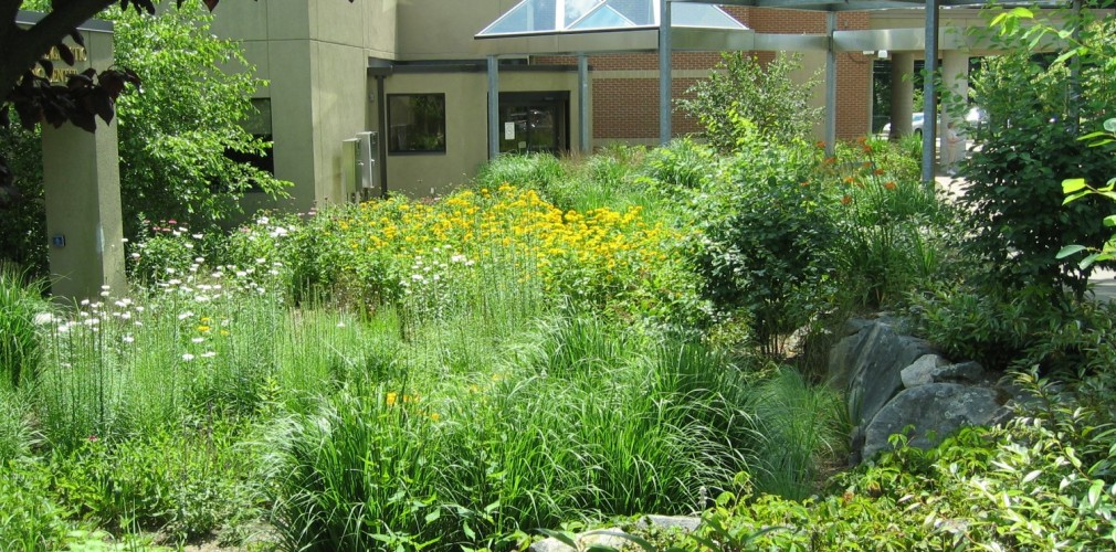 Kent Hospital's Breast Health Center Healing Rain Garden Provides An Ever-changing Mosaic Of Native Flowers, Grasses, Shrubs And Trees. The Garden Infiltrates Roof Runoff To Comply With Environmental Standards.
