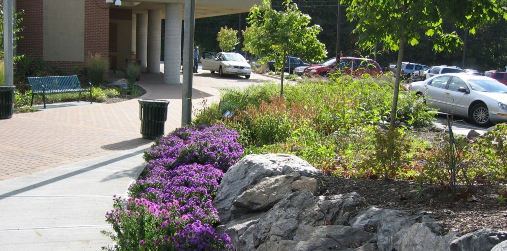 Transformation Of Kent Hospital's Campus To Lower Maintenance Sustainable Model Began With Master Plan And Early Projects Like The Emergency Department Entrance.  Existing Ledge Rock Is Preserved And Enhanced With Native Plantings Such As Purple Aster.