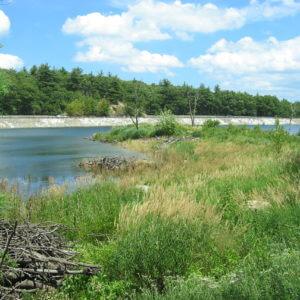 Landscape Design | Milton , MA | Blue Hills Reservation Reservoir