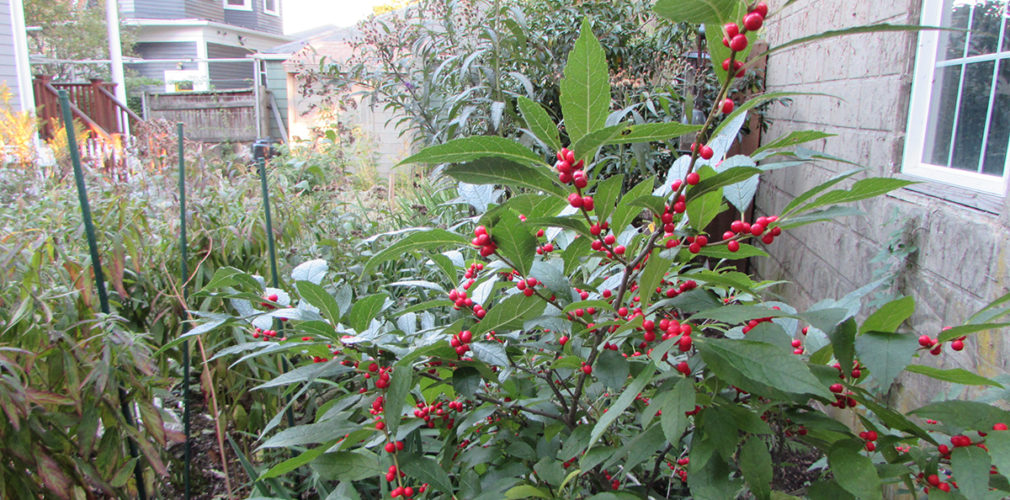 Fuqua Berry Web