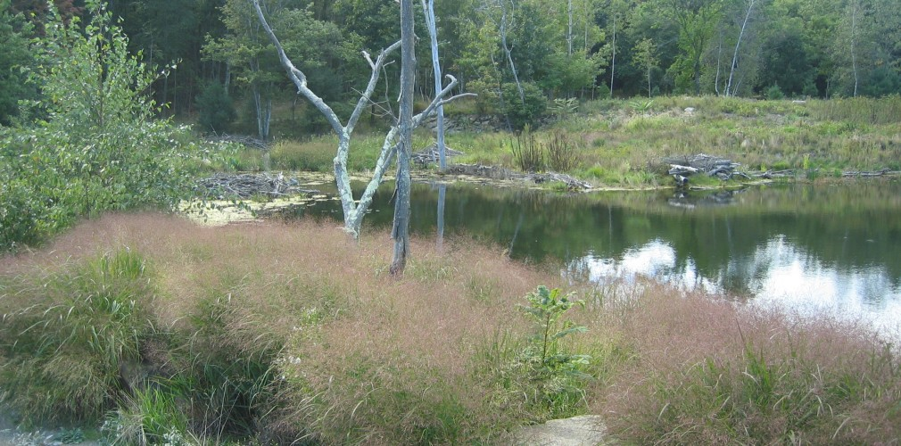 Landscape design milton ma blue hills reservation for Design of stabilisation pond