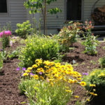 Landscape Design | Montague, MA | Entry Oasis