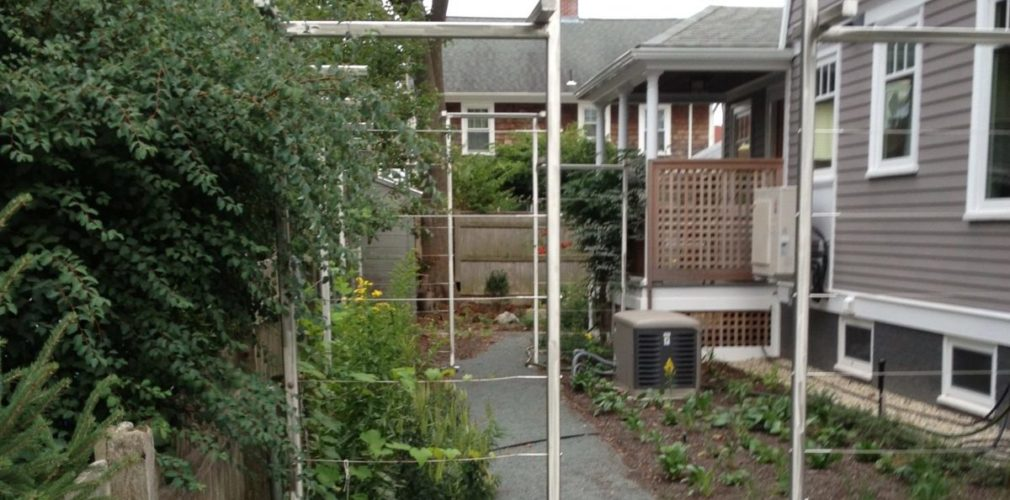 Steel Trellis System Provides Framework For Developing Green Wall Screen To Privatize Tight Sideyard On This Urban Property.