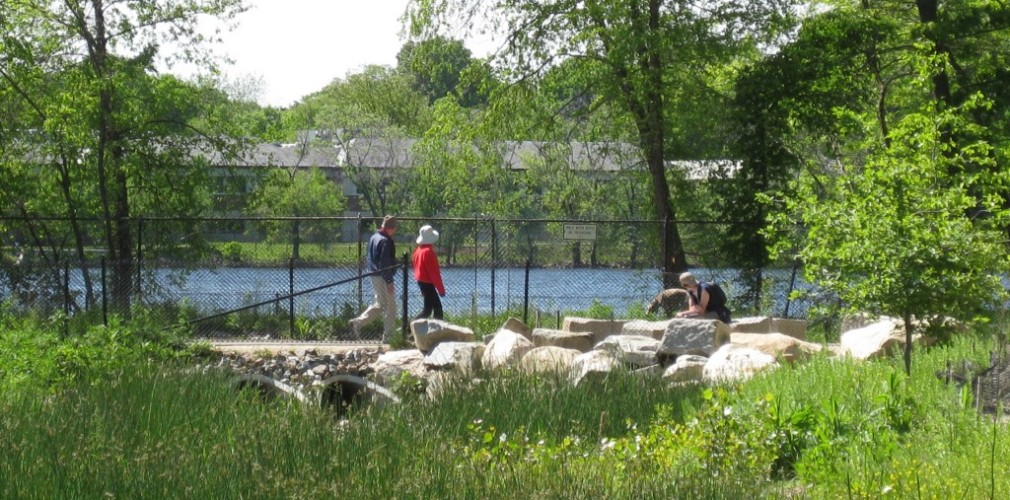 At Fresh Pond, Tom's Collaborative Design Work Included 4-acre Constructed Wet Meadow Which Cleanses Runoff Prior To Discharge Into Drinking Water Reservoir While Providing Substantial Recreational And Ecological Benefits In The City.