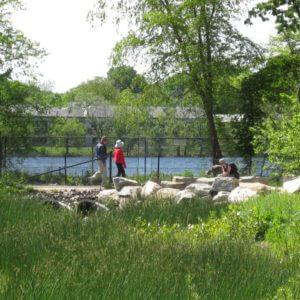 Landscape Design | Cambridge, MA | Fresh Pond Reservation