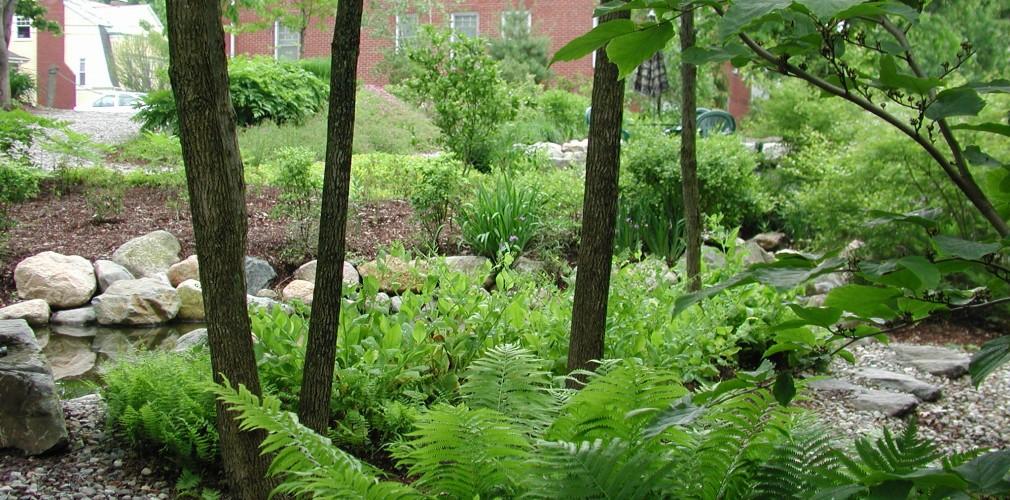 Landscape design boston ma urban wild for Design of ash pond