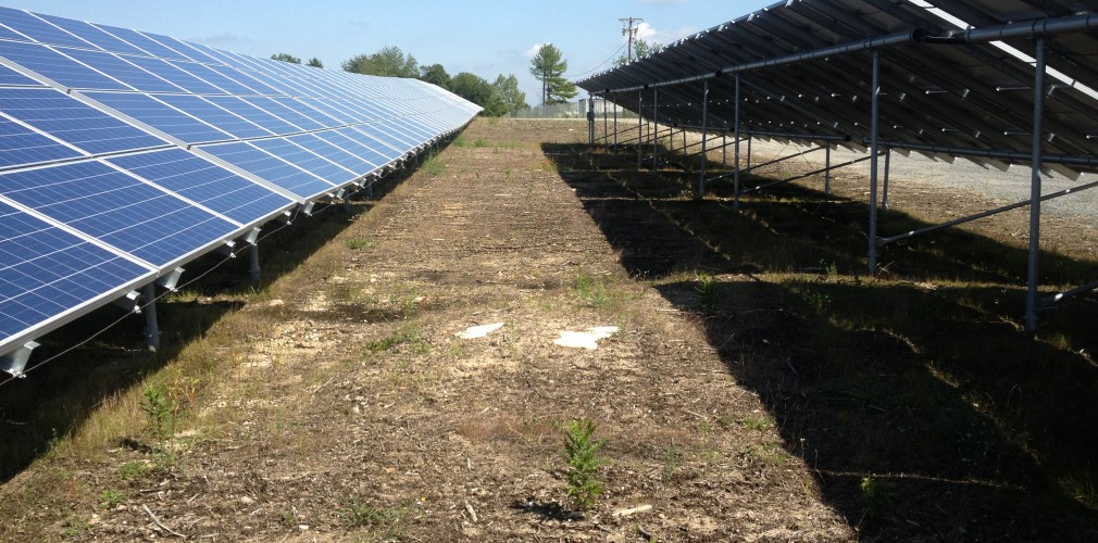 Solar Farm Site Suffered From Extreme Compaction And Erosion During Its First Year Of Operation.