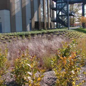 Landscape Design | Springfield, MA | LA Fitness/Basketball Hall Of Fame