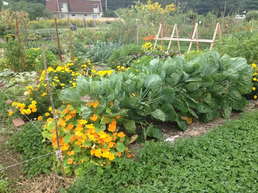 Landscape Design Northampton Ma Florence Organic