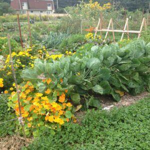 Landscape Design | Northampton, MA | Florence Organic Community Garden