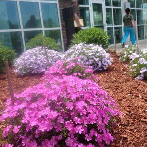 Landscape Design | Newington, CT | VA Of Connecticut Healthcare System