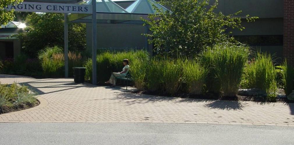Kent's Breast Health Center Rain Garden A Few Years After Installation.