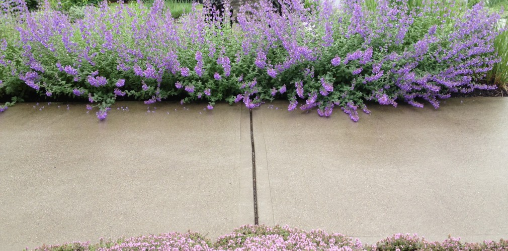 Kent Hospital's PETScan And Infusion Center Serenity Garden Provides Easily Negotiable Walking Paths Flanked By Colorful, Fragrant, And Medicinal Plants Such As Thyme And Catmint.