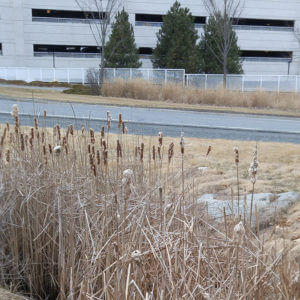 Dartmouth-Hitchcock Medical Center | Stormwater Drainage